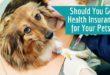 Pet Insurance1